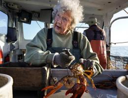 hauling lobsters